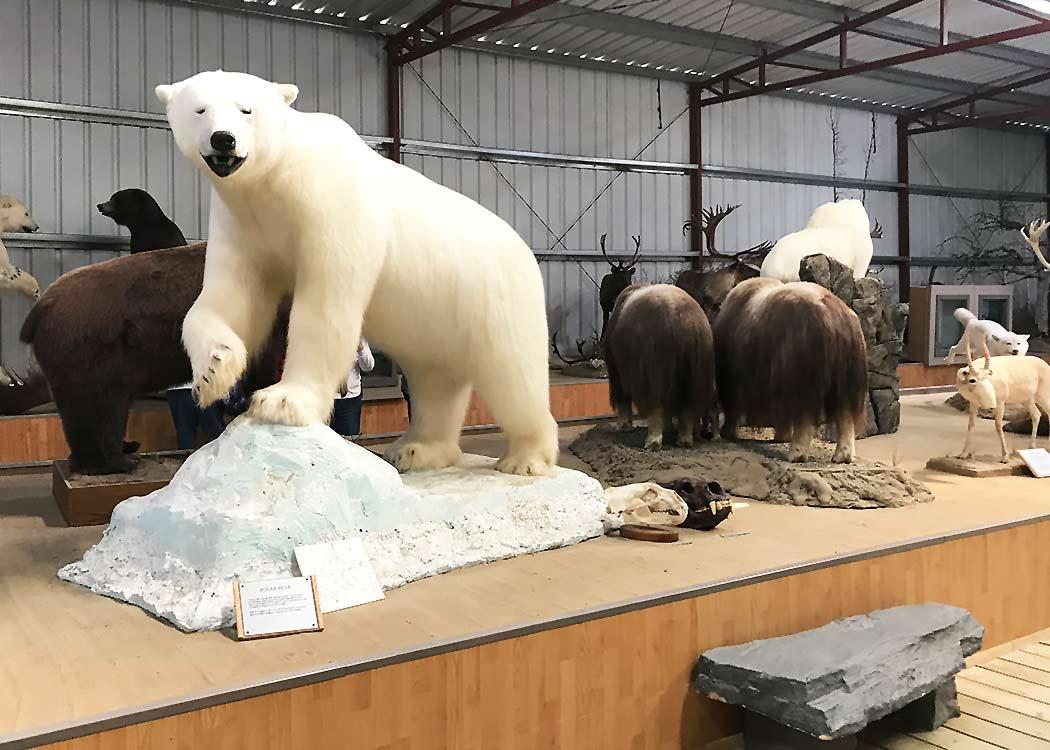 Yukon Discovery with Alaska Shore Tours