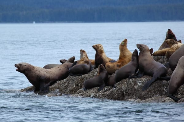 whale4, whale watching tour juneau with Alaska Shore Tours