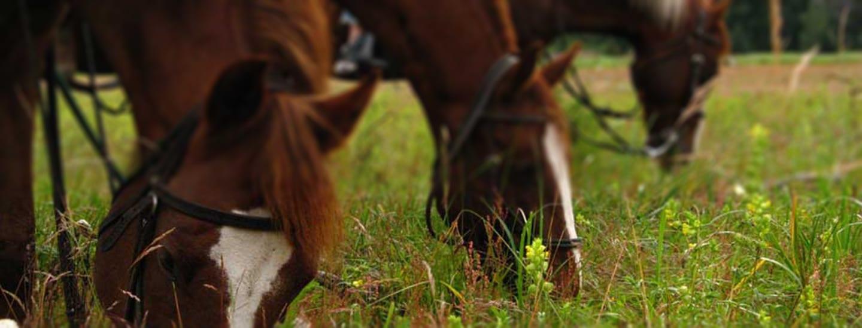 Chilkoot Horseback Adventure with Alaska Shore Tours