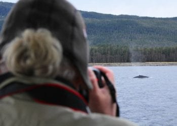 Whale Watching and Mendenhall Glacier Alaska Shore Excursions