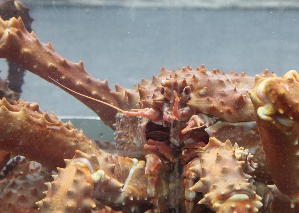 Bering Sea Crab Fishermen's Tour with Alaska Shore Tours