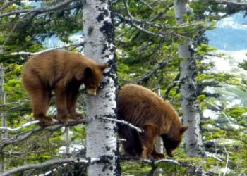 3-Hour White Pass Summit Skagway Private Tours