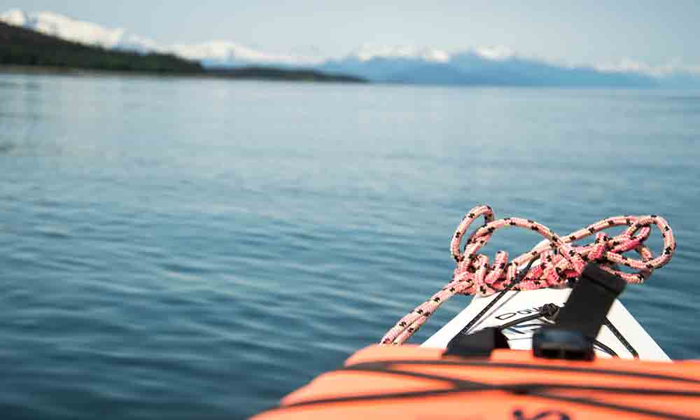 Paddle With Whales Kayak Adventure with Alaska Shore Tours