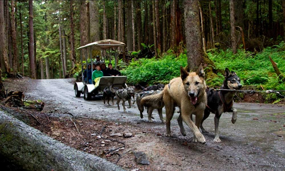 Juneau Sled Dog Discovery