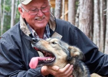 Sled Dog Adventure and Musher's Camp with Alaska Shore Tours