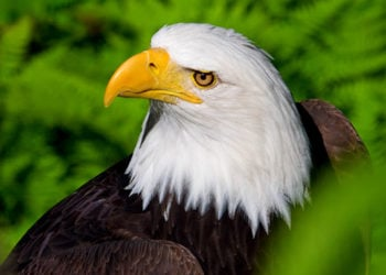 Wildlife Sanctuary and Eagle Sanctuary with Alaska Shore Tours