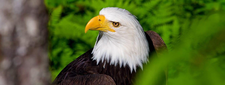 Wildlife Sanctuary and Eagle Sanctuary with Alaska Shore Tours