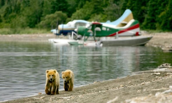 Charitable Donations by Alaska Shore Tours, the Best Alaskan Excursions