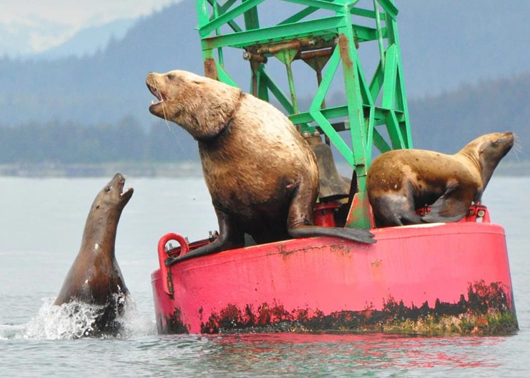 Juneau Whale Watching and King Crab Feast