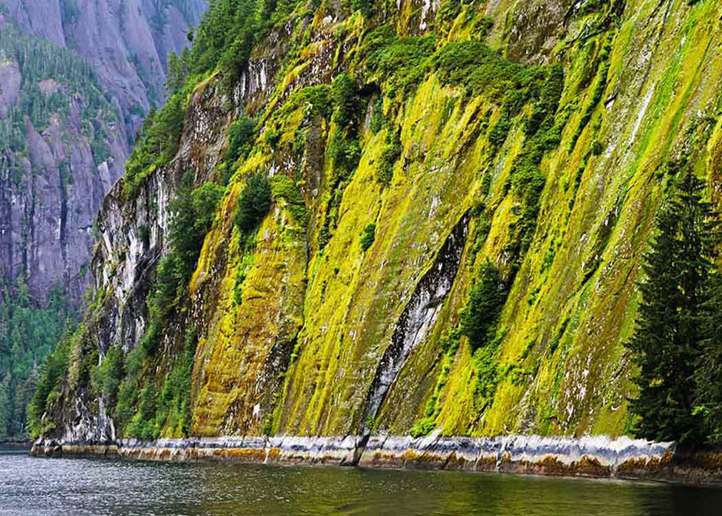 Misty Fjords Cruise and Flightseeing with Alaska Shore Tours