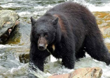 Neets Bay Bear Viewing and Flightseeing with Alaska Shore Tours