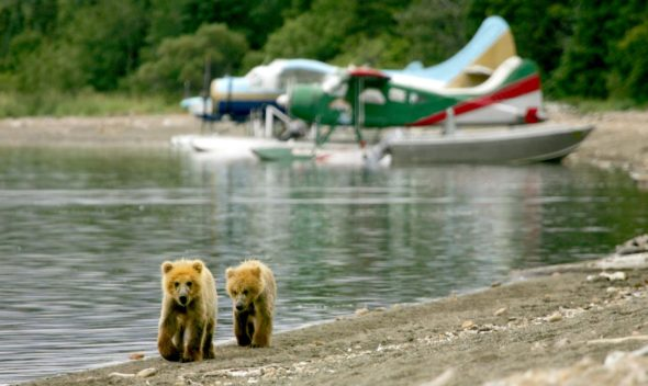 10 Best Alaska Shore Excursions