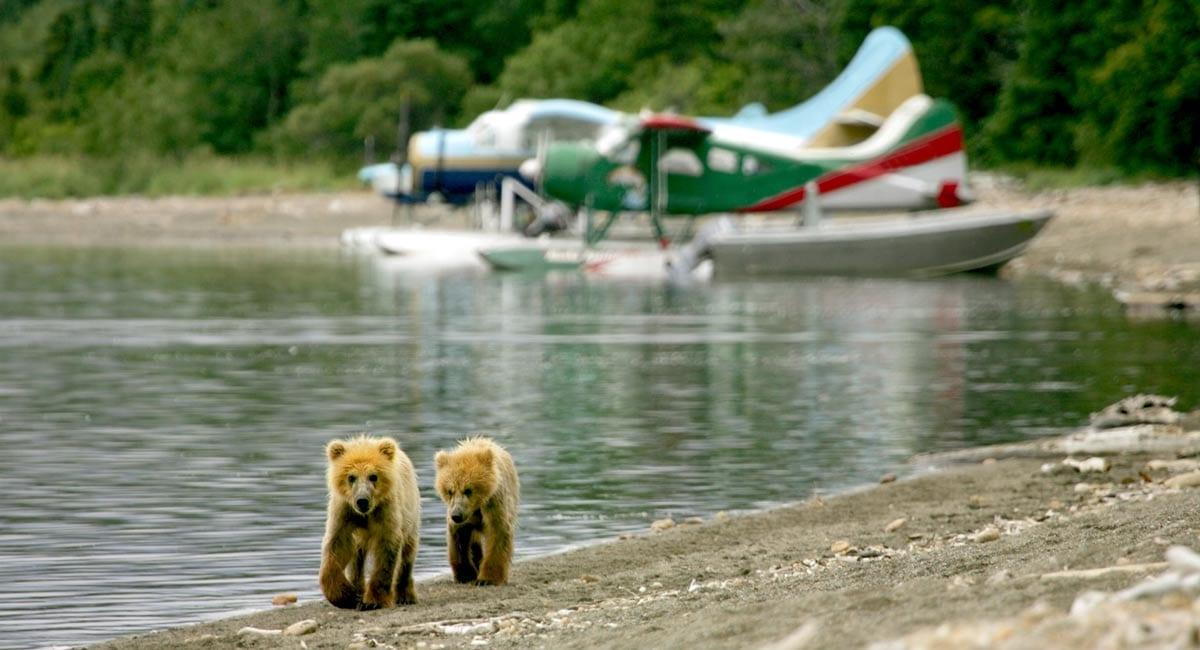 10 Best Alaska Shore Excursions