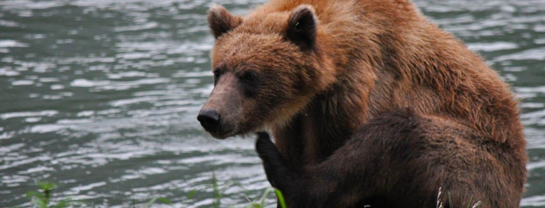 Wildlife Safari and Bear Viewing with Alaska Shore Tours