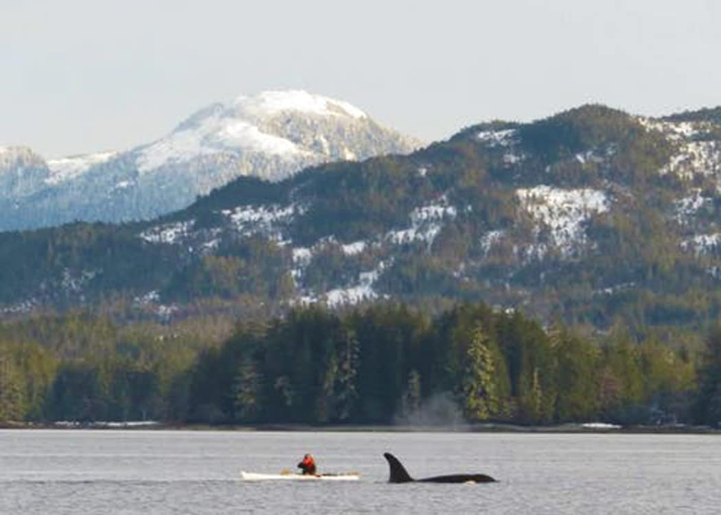 Ketchikan Kayak Eco Tour with Alaska Shore Tours