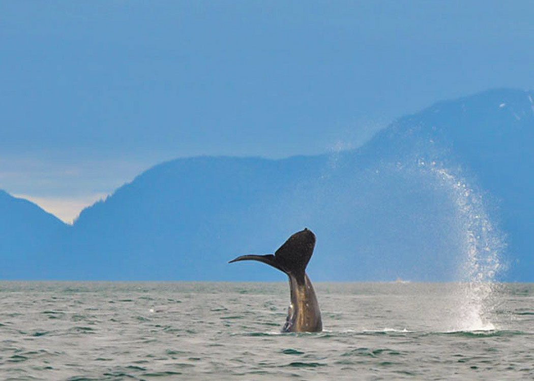 Ales & Whales with Alaska Shore Tours