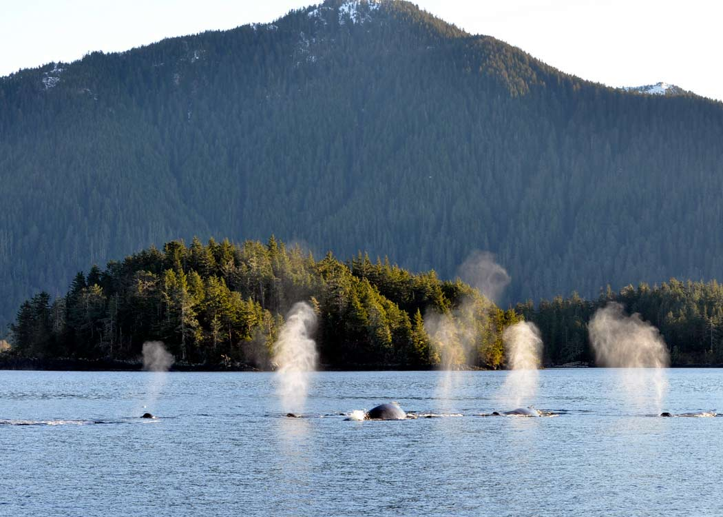 Private Wilds of Sitka Sound Expedition by Boat with Alaska Shore Tours