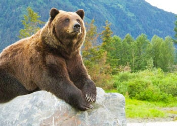 Alaska Wildlife Day Tour with Alaska Shore Tours